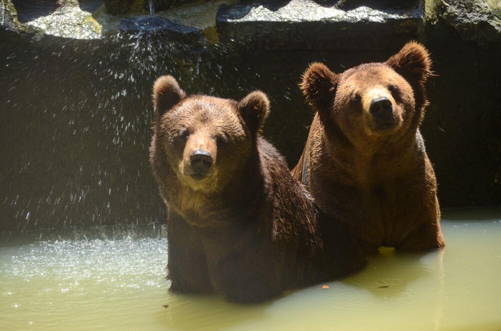 Animais do Parque de Dois Irmãos estão sentindo falta do público nesse período de quarentena